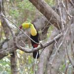 World Slam Adventures Mayan Jungle Safari Toucan