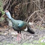 World Slam Adventures Mayan Jungle Safari Turkey 2