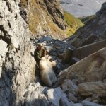 ULTIMATE ALASKA MOUNTAIN GOAT 2 2